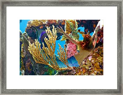 Mermaid And Snorkeler Framed Print by Paula Porterfield-Izzo