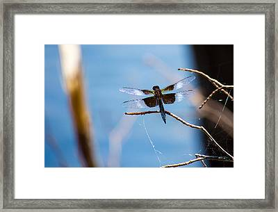 Merrill Creek Dragonfly Framed Print