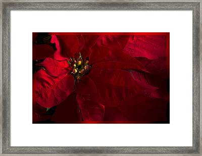 Merry And Bright Framed Print by Cindy Rubin