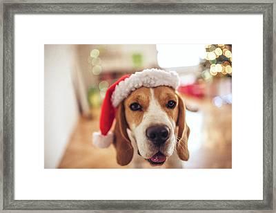 Merry Christmas Framed Print by Aleksandarnakic