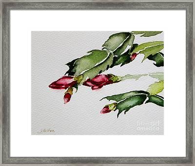 Merry Christmas Cactus 2013 Framed Print