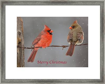 Merry Christmas Cardinals Framed Print