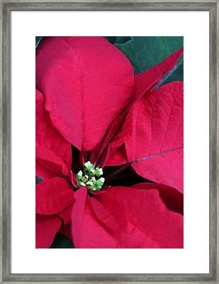 Merry Christmas Darling Framed Print