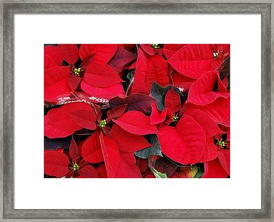 Merry Christmas And Hapy New Year  Framed Print