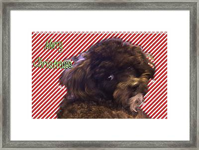 Merry Christmas Framed Print by Terry Anderson