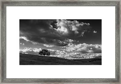 Mesa Grande Tree Framed Print by Joseph Smith