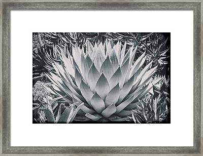 Mescal Agave Framed Print by Kelley King