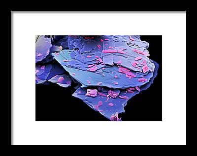 Pharmacology Framed Prints