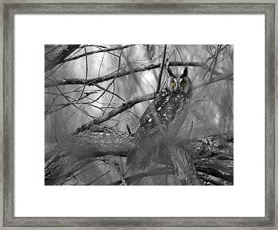 Mesmerizing Eyes Framed Print by James Peterson