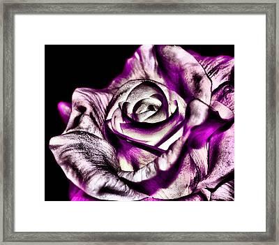Mesmerizing Rose Framed Print