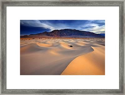 Mesquite Gold Framed Print by Darren  White