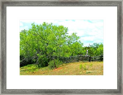 Mesquite Tree And Cedar Post Fence Framed Print
