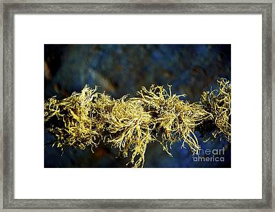 Mess Up Life Framed Print by Bobby Mandal