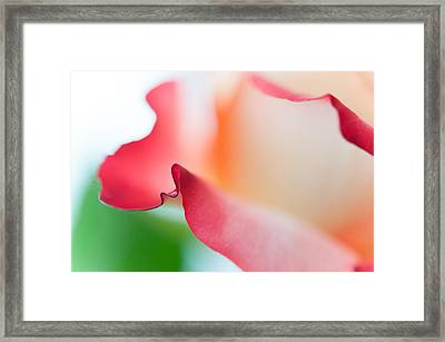 Messenger From Another Realm II. Ethereal Rose Framed Print by Jenny Rainbow