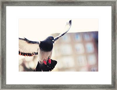 Messenger Of Love. Pink Spring In Amsterdam Framed Print by Jenny Rainbow