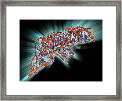 Metal-sensing Rna Molecule Framed Print