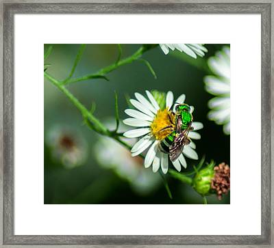 Metallic Green Sweat Bee Framed Print by Optical Playground By MP Ray