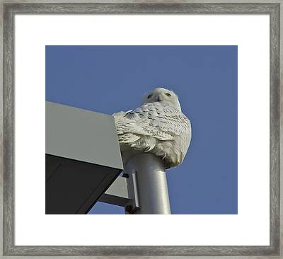 Metallic Perch Framed Print by Alice Mainville