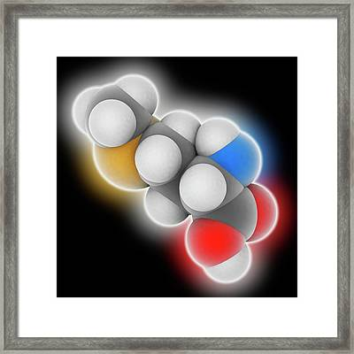 Methionine Molecule Framed Print by Laguna Design