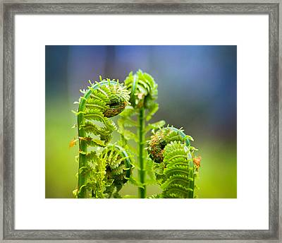 Meting Of The Ferns Framed Print by Bill Pevlor