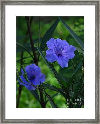 Mexican Bell Framed Print by Greg Patzer