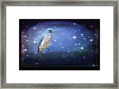 Mexican Blue Jay Framed Print
