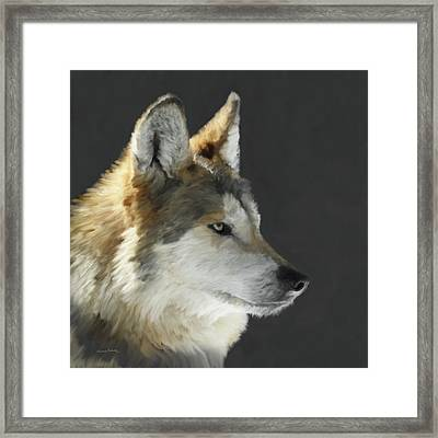Mexican Grey Wolf Portrait Freehand Framed Print