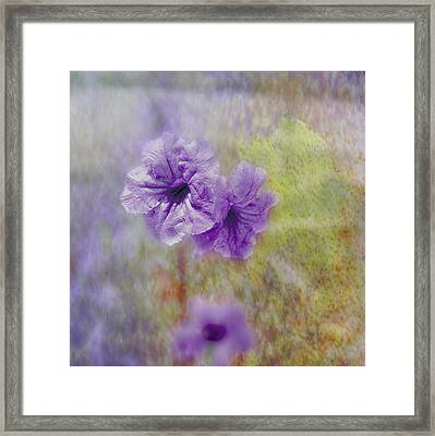 Mexican Petunia Framed Print