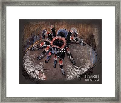 Mexican Redknee Tarantula Framed Print
