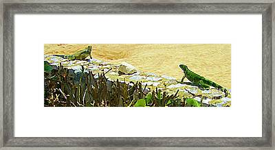 Mexican Standoff  Framed Print