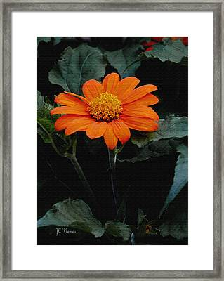 Framed Print featuring the photograph Mexican Sunflower by James C Thomas