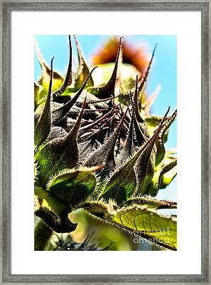 Framed Print featuring the photograph Mexican Sunflower by Joel Loftus