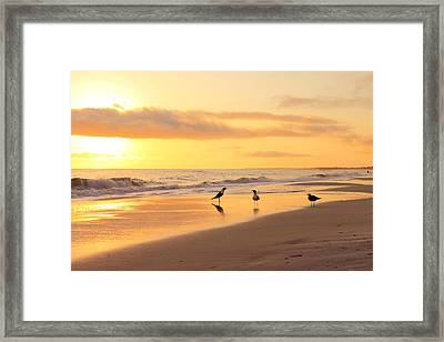 Mexico Beach Sand Pipers Framed Print by Saya Studios