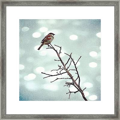 #mgmarts #bird #nature #life #bestpic Framed Print