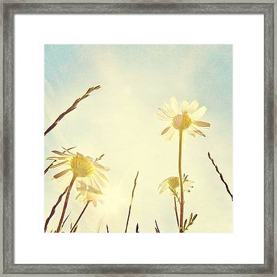 #mgmarts #daisy #all_shots #dreamy Framed Print