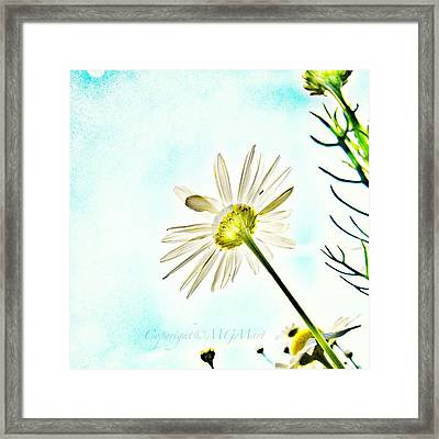 #mgmarts #daisy #flower #morning Framed Print by Marianna Mills