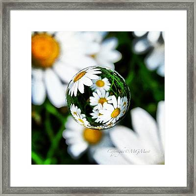 #mgmarts #daisy #flower #weed #summer Framed Print