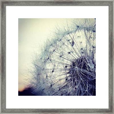 #mgmarts #dandelion #love #micro Framed Print