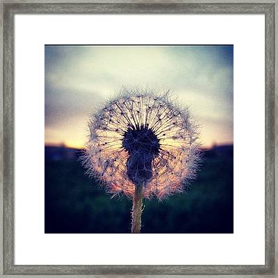 #mgmarts #dandelion #sunset #simple Framed Print by Marianna Mills