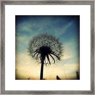 #mgmarts #dandelion #weed #sunset #sun Framed Print by Marianna Mills