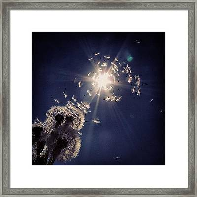 #mgmarts #dandelion #wish #makeawish Framed Print by Marianna Mills