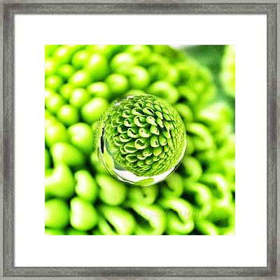#mgmarts #micro #world #effect Framed Print by Marianna Mills