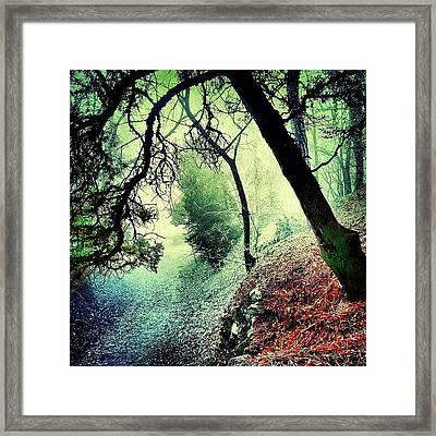 #mgmarts #nature #fog #visionary Framed Print