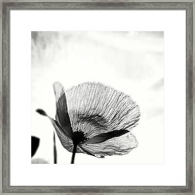 #mgmarts #poppy #summer #spring #sunny Framed Print by Marianna Mills