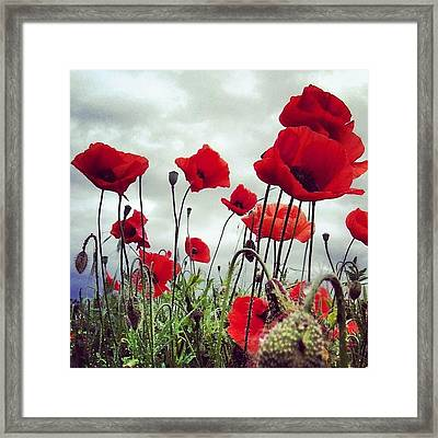 #mgmarts #poppy #weed #flower #spring Framed Print by Marianna Mills