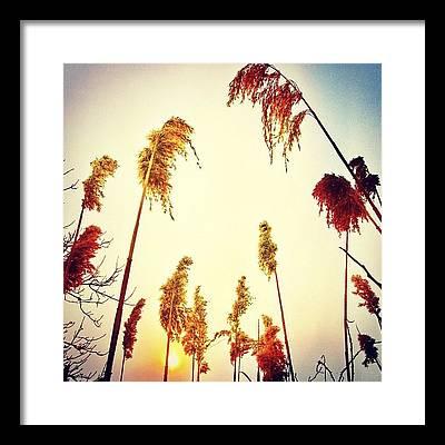 Beautiful Sunrise Framed Prints