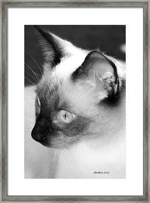Framed Print featuring the photograph Mi Amigo by Dick Botkin