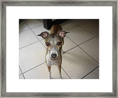 Mia Giselle - I Am So Petite - Italian Greyhound Framed Print by Santos Arellano