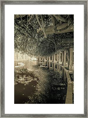 Miami Beach Lake 2 Framed Print