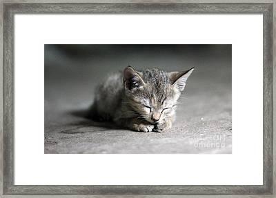 Miau Framed Print by Jan Wolf